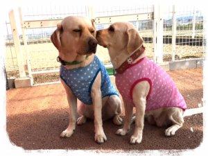 画像1: New DOG Tシャツ(メッシュタイプ)