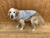 DOG Tシャツ(NEW!)